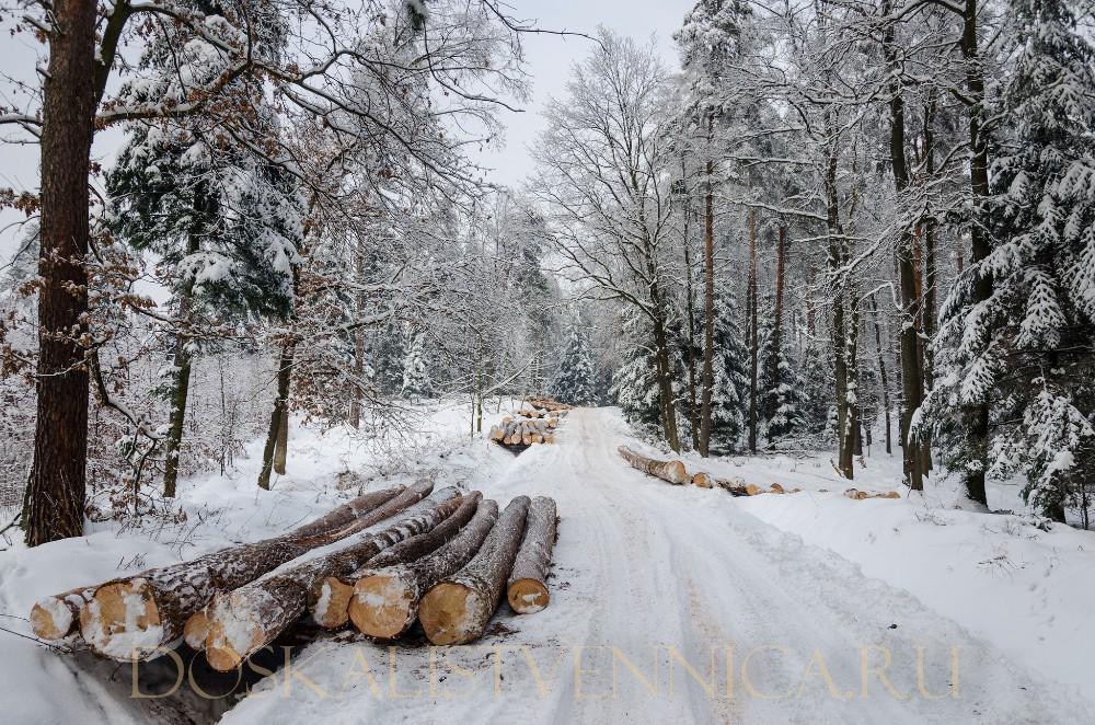 Sawn_Siberian_Larch_wood_Timber